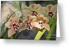 Peach Pastel Palette Greeting Card