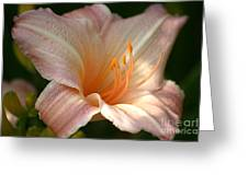 Peach Perfection Greeting Card