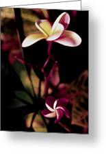 Peach Pink Orchid Greeting Card