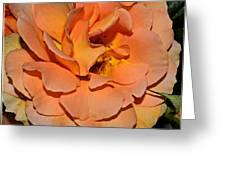 Peach Rose - Digital Paint Greeting Card