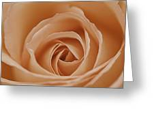 Peach Rose Greeting Card by Lesley Rigg