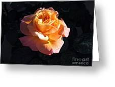 Peach Rose Palm Desert Greeting Card