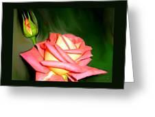 Peach Rose Watercolor Greeting Card