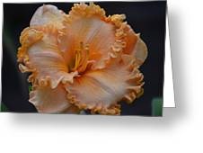 Peach Ruffled Lily Greeting Card
