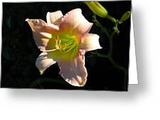 Peaches And Cream Greeting Card