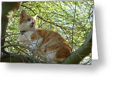 Peaches In A Tree Greeting Card