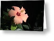 Peachy Hibiscus Greeting Card