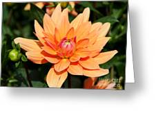 Peachy Petals Greeting Card