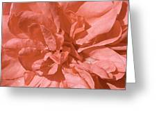 Peachy Pink Jasper Rose Greeting Card