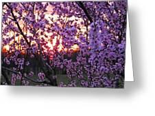 Peachy Sunset 1 Greeting Card