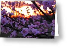 Peachy Sunset 3 Greeting Card