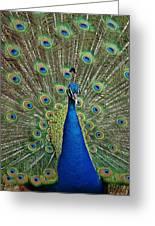 Peacock Blue Greeting Card