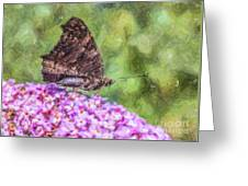 Peacock Butterfly Inachis Io On Buddleja Greeting Card