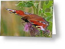 Peacock Butterfly On Thistle Square Greeting Card