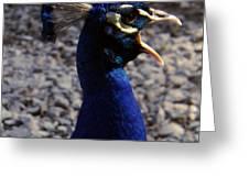 Peacock Caw Greeting Card
