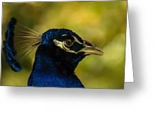 Peacock Closeup Greeting Card