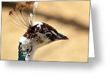 Peacock Crest Greeting Card