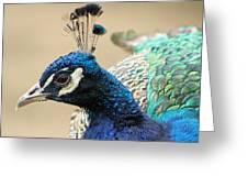 Peacock Greeting Card