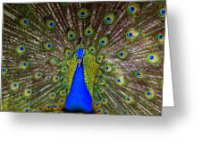 Peacock Extraordinaire  Greeting Card by DerekTXFactor Creative