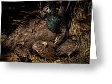 Peacock Family Gathering Greeting Card