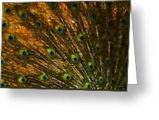 Peacock Feathers 2 Greeting Card