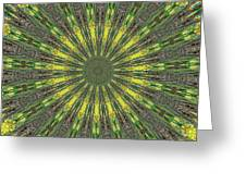 Peacock Feathers Kaleidoscope 5 Greeting Card