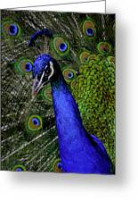 Peacock Head And Tail Greeting Card