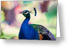Peacock I. Bird Of Paradise Greeting Card