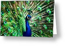 Peacock - Impressions Greeting Card