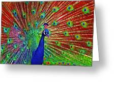 Peacock In Front Of Red Barn Greeting Card