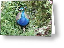 Peacock In The Brush Greeting Card