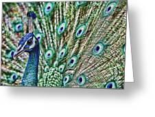 Peacock Greeting Card by Karen Walzer