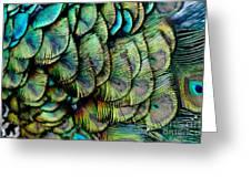 Peacock Pattern Greeting Card