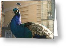 Peacock Profile Greeting Card