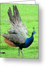 Peacock Ritual Greeting Card
