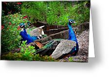 Peacocks In The Garden Greeting Card