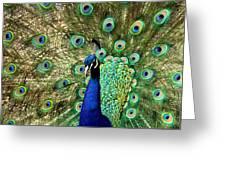 Peacocky Attitude Greeting Card