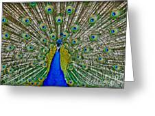 Peafowl Peacock Greeting Card