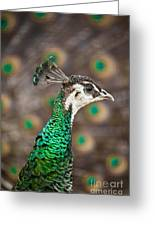 Peahen And Peacock Greeting Card