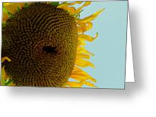 Peak A Boo Sunflower Greeting Card