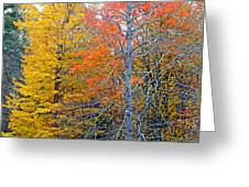 Peak And Past Foliage Greeting Card