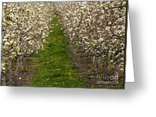 Pear Blossom Lane Greeting Card