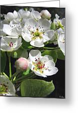 Pear Blossom Special Greeting Card
