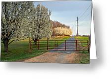 Pear Tree Blossoms In The Carolinas Greeting Card