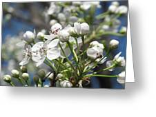 Pear Tree In Bloom Greeting Card