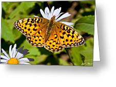 Pearl Border Fritillary Butterfly On An Aster Bloom Greeting Card