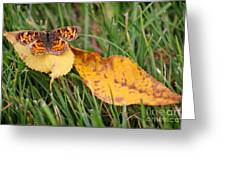 Pearl Crescent Butterfly On Yellow Leaf Greeting Card