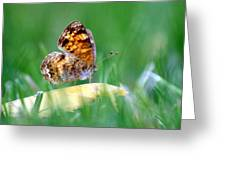 Pearl Crescent Butterfly Square Grass Greeting Card