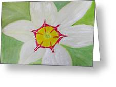 Pearl White Flower Greeting Card