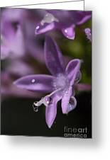 Pearls Greeting Card